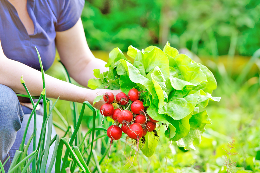 If you're a first-time grower, check out these three spring vegetables you can grow: lettuce, spinach, and radishes.