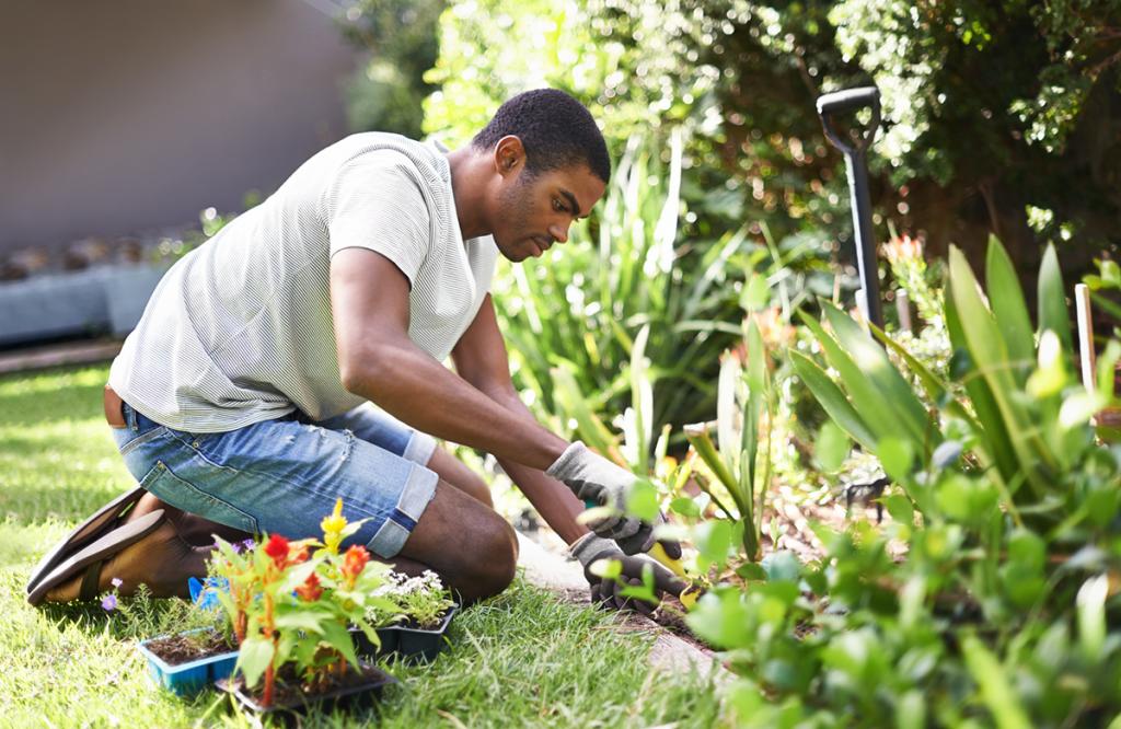 A young man tends a garden